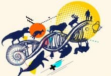 What are the mechanisms of evolution