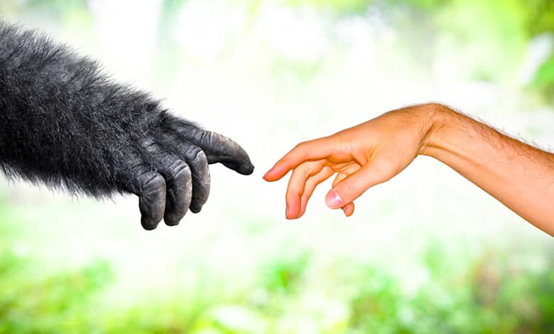 What makes humans different from animals