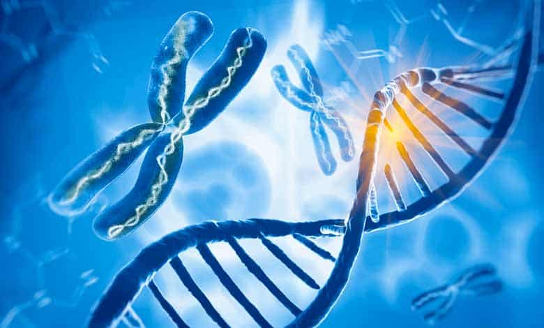 How does new genetic information evolve
