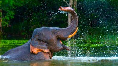 Why do they say an elephant never forgets