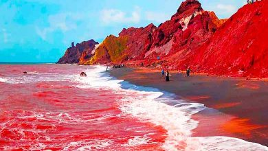 Why red sea is red