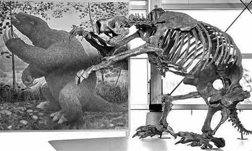 Sloths fossil records