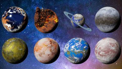 Which planets can support life