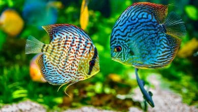 Why do fish have many colors